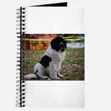 Landseer Newfie Journal