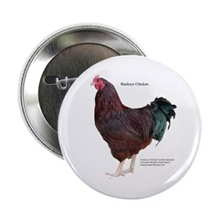 "Buckeye Chicken 2.25"" Button"