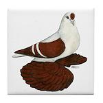 Silesian Swallow Pigeon Tile Coaster