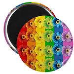 Rainbow Daisies Magnet