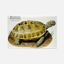 Russian Tortoise Rectangle Magnet
