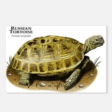 Russian Tortoise Postcards (Package of 8)
