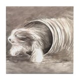 Bearded collie agility Drink Coasters
