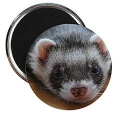 Ferret-Relaxed Magnet