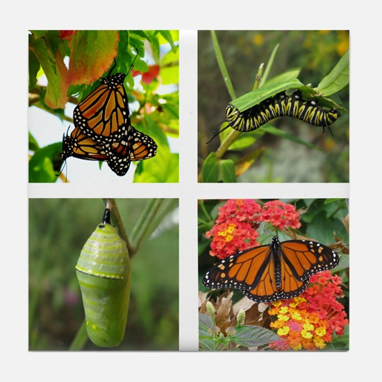 Monarch Life Cycle Tile Coaster