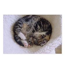 Kitten Catnap Postcards (Package of 8)