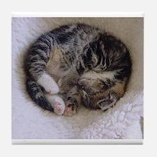 Kitten Catnap Tile Coaster