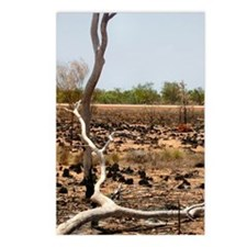 Bush Fire Outback Postcards (Package of 8)