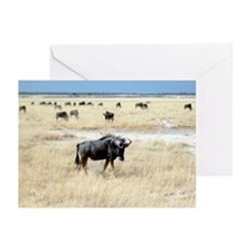 Wildebeest Greeting Cards (Pk of 20)