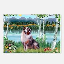 Birches/Aussie Shep 1 Postcards (Package of 8)