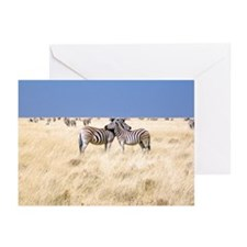 Zebras Greeting Cards (Pk of 20)