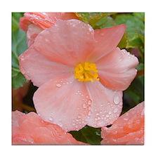 Begonia Blossom Tile Coaster