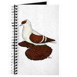 Red Fullhead Swallow Pigeon Journal