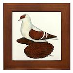 Red Fullhead Swallow Pigeon Framed Tile