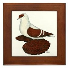 Red Fullhead Swallow Pigeon Framed Tile