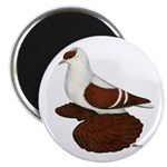 """Red Fullhead Swallow Pigeon 2.25"""" Magnet (10"""