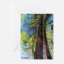 TOWERING REDWOODS Greeting Cards (Pk of 10)