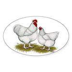 Orpington White Chickens Sticker (Oval 10 pk)