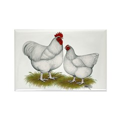 Orpington White Chickens Rectangle Magnet (100 pac