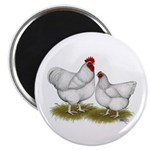 """Orpington White Chickens 2.25"""" Magnet (100 pa"""