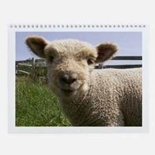 Babydoll Sheep Wall Calendar