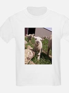 Baby Lamb T-Shirt