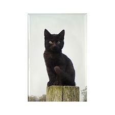 Black Kitty Rectangle Magnet