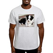 Border Collie Puppy Lying
