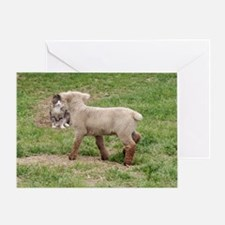 Lamb & Kitty Greeting Card