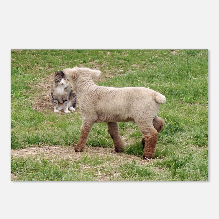 Lamb & Kitty Postcards (Package of 8)