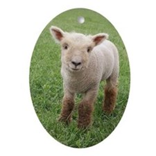 Sweet Lamb Ornament (Oval)
