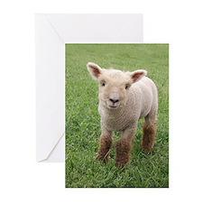 Sweet Lamb Greeting Cards (Pk of 20)