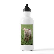 Sweet Lamb Water Bottle