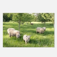 Grazing Woolies Postcards (Package of 8)