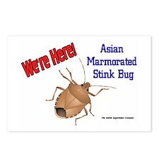 Stink Bug Postcards (Package of 8)