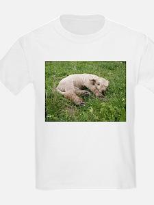 Sleepy Baby T-Shirt