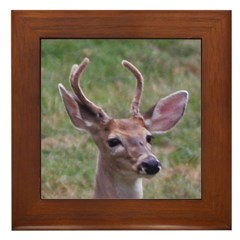 Velvet Buck Framed Tile