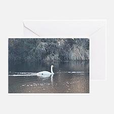 Trumpeter Swan Greeting Cards (Pk of 10)