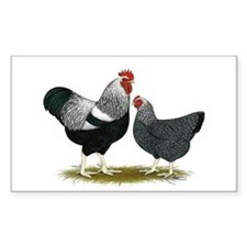 Plymouth Rock Penciled Chicke Decal