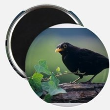 Blackbird - Magnets