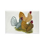 Sebright Rooster Assortment Rectangle Magnet (100