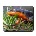 Salamander California Newt Mousepad