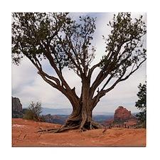 Sedona Tree Tile Coaster