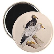 "Egyptian Vulture 2.25"" Magnet (10 pack)"