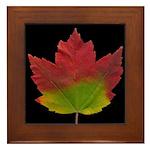 Fall Maple Leaf Framed Tile