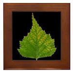 Fall Birch Leaf Framed Tile