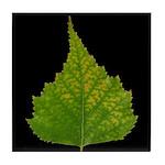 Fall Birch Leaf Tile Coaster