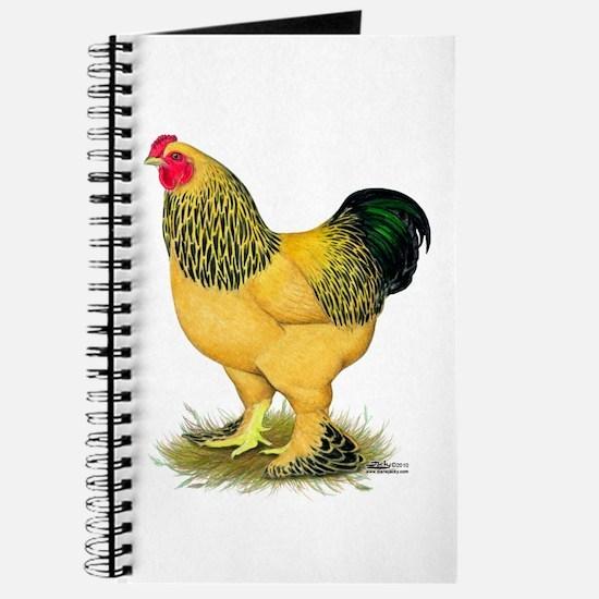 Brahma Buff Rooster Journal