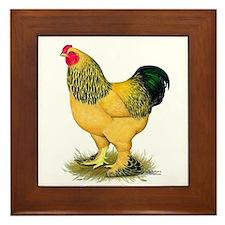 Brahma Buff Rooster Framed Tile