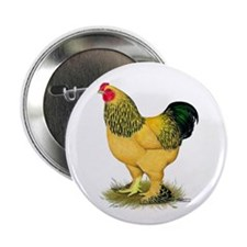 "Brahma Buff Rooster 2.25"" Button"